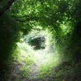 みどりのトンネル